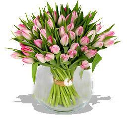Kytice Růžové tulipány kvetiny