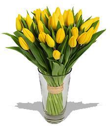 Kytice Žluté tulipány kvetiny