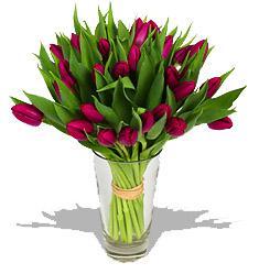 Kytice Fialové tulipány kvetiny
