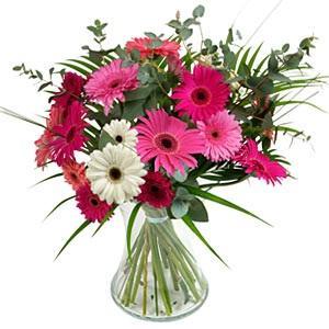 Kytice Gerberová Exploze kvetiny